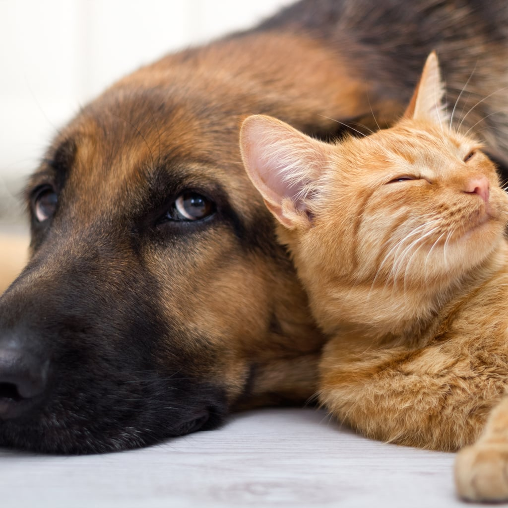 Natural Pet-Friendly Cleaning Products