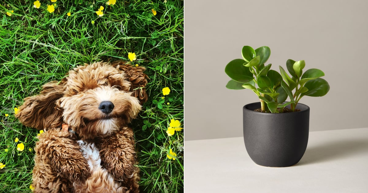 23 Houseplants That Are Good For You, Your Home, and, Most Importantly, Your Pets!