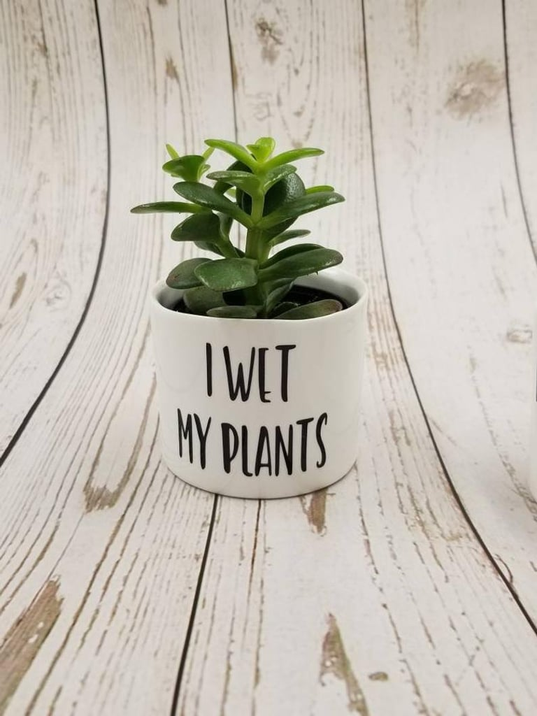 """Your Succulent Needs This """"I Wet My Plants"""" Holder From Etsy"""