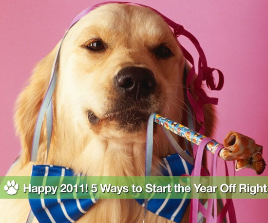 New Years Resolutions For Pets and New Years Resolutions For Pet Lovers