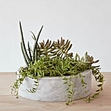 The Citizenry  Marble Succulent Planter