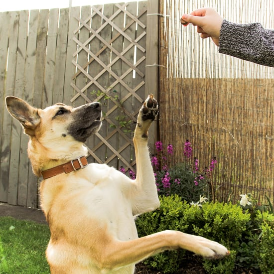 Expert-Recommended Dog-Training Treats