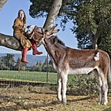 Oklahoma Sam: The Tallest Donkey