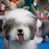 Attend a pet show or meetup in your area.