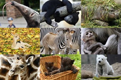 """Who Is """"Zoo Cute"""" . . . or the zoo cutest, I should say?"""