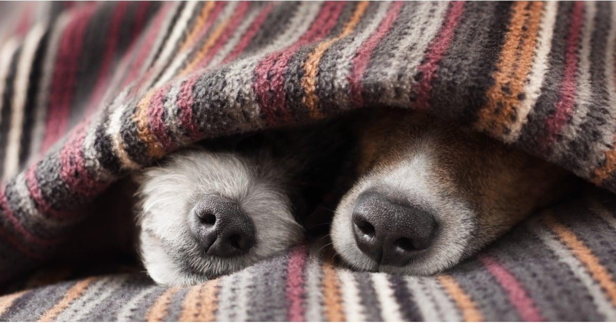 Books For Dog-Lovers | POPSUGAR Pets