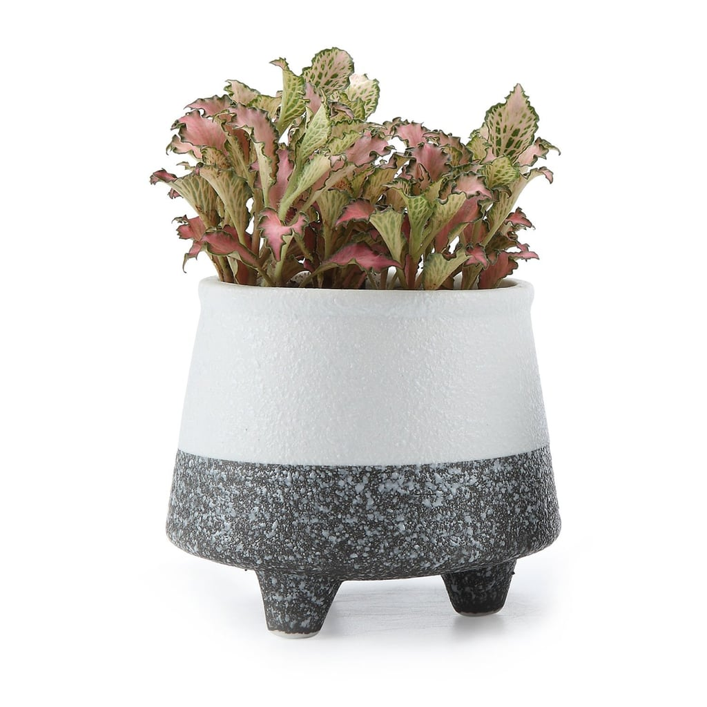 Ceramic Korae Style SucculentCactusFlower Pot 8 Ceramic