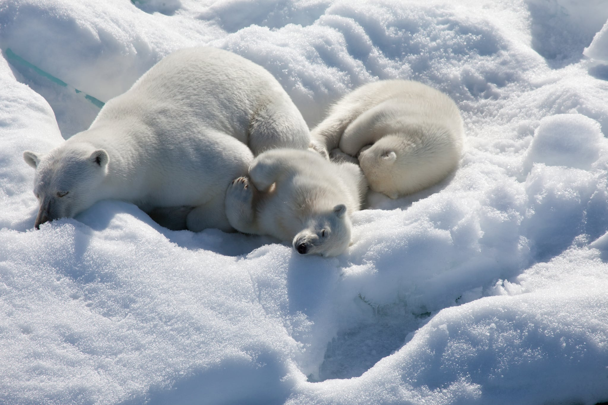 Nap time! Photo courtesy of Warner Home Entertainment
