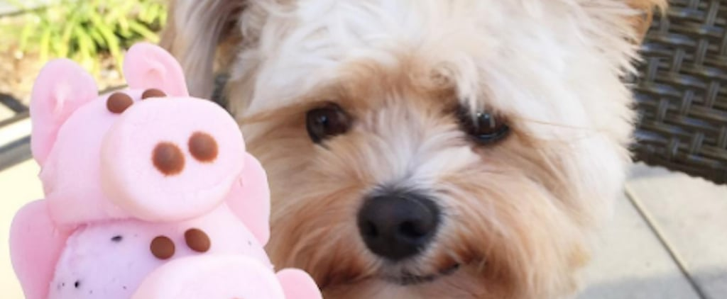 From Stray Dog to Instagram Star: Popeye the Foodie's Heartwarming Success Story