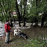 A man walked his dogs near Bear Creek, which flooded after heavy rainfall in Boulder, CO.