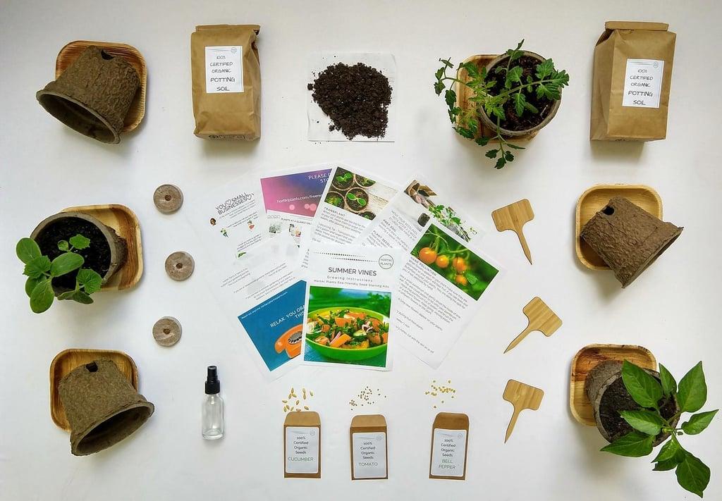 Hortiki Plants Organic Tomato, Cucumber, and Mini Bell Peppers Kit