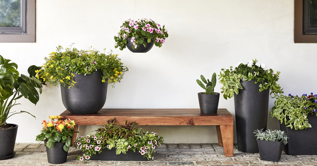 These New Bloomscape Plants Will Make You Feel Like an Accomplished Gardener