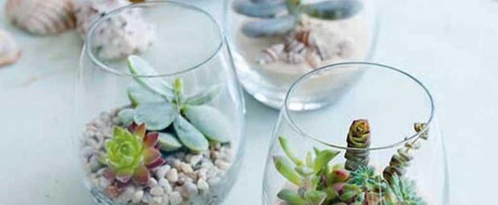 You Already Own the 1 Household Item People Are Turning Into Trendy Terrariums