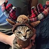 يمتلك قطّكِ مجموعة مذهلةً من الأزياء التي تفوق ملابسك الشخصيّة في روعتها وجمالها