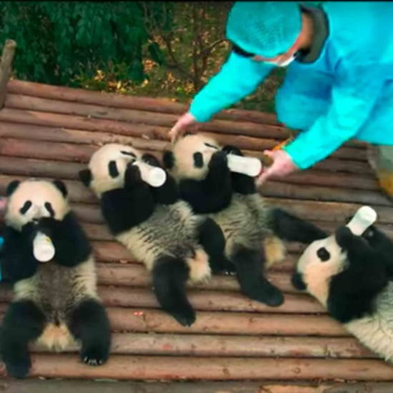 Who Is Narrating the Pandas Movie?