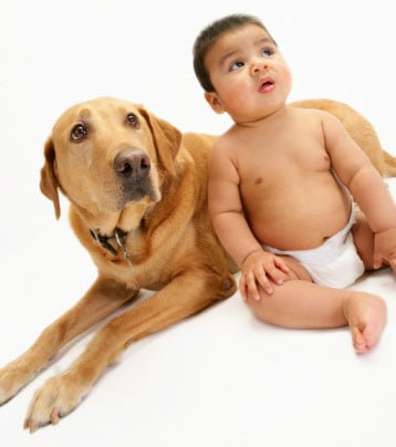 Dogs Understand Same Cues as Children