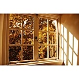 And the late-day Autumn sun creates beautiful ambient light