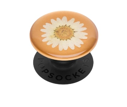 Pressed Flower White Daisy