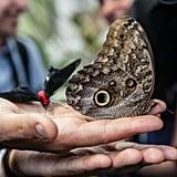 A Flutter