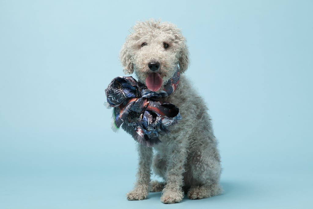 Wilfred, a Bedlington Terrier, with Ginny Litscher's Blue Silk Skulls Scarf ($465).