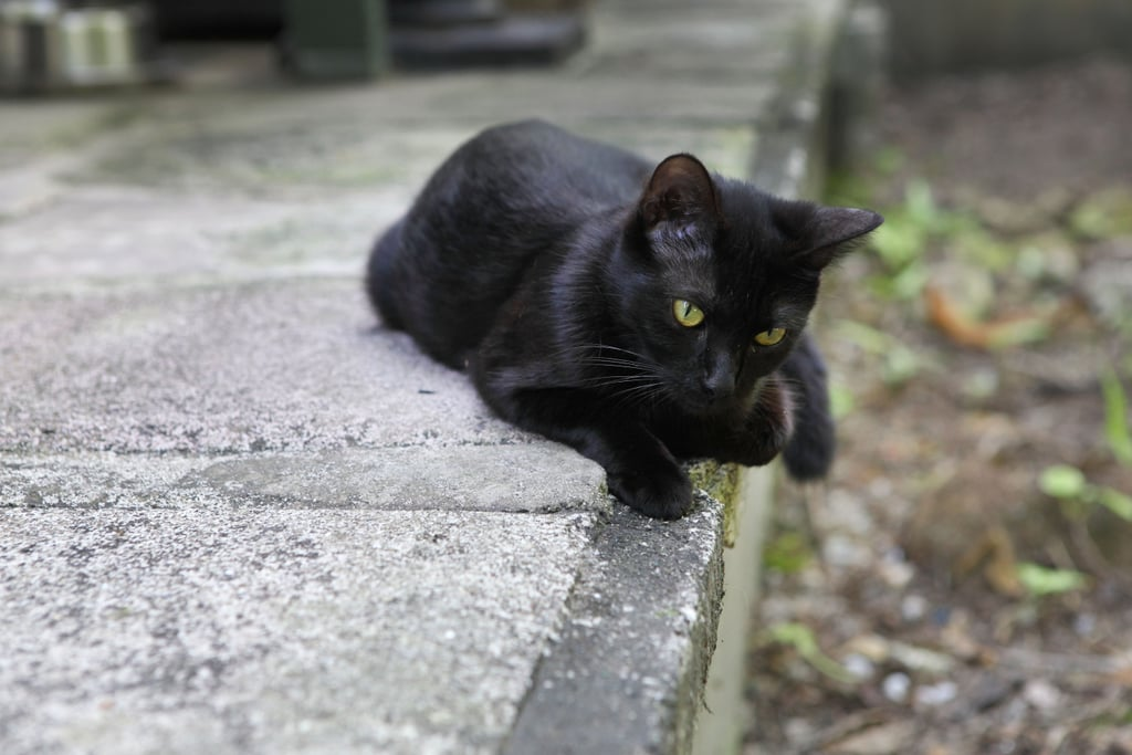 College Students Use Yik Yak to Find Lost Cat