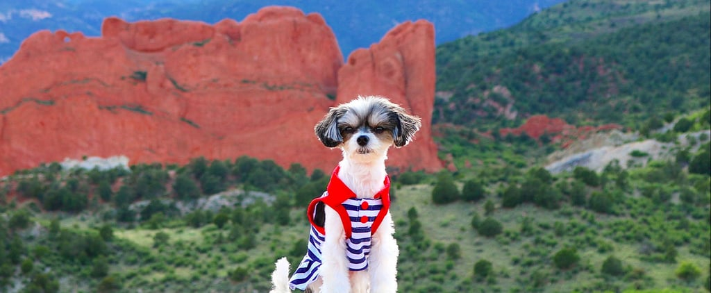 Tinkerbelle the Dog Visits Colorado and Makes Mountain Life Look Fashionable