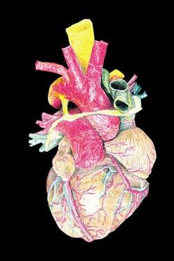 Men vs. Women: Heart Disease
