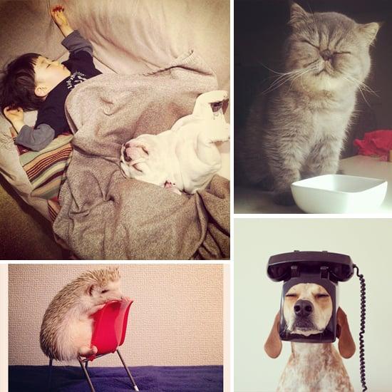 Cute Animals on Instagram