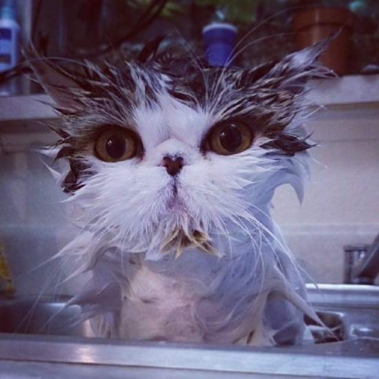 Instagram Pictures of Cats Bathing