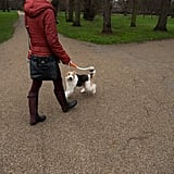 In Torino, Italy, dog owners must take their dogs on walks three times a day. You may not threaten someone with an unloaded gun in Texas. Men who cross-dress in Australia may only do so if the dresses are not strapless. No one is allowed to carry a plank on a sidewalk in England. If you're in Scotland and someone knocks on your door asking to use the bathroom, you must let them in.