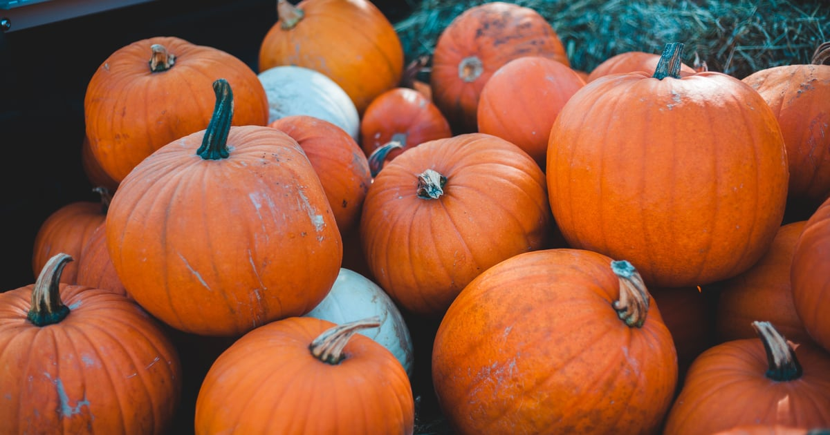 A Step-by-Step Guide to Growing Your Own Pumpkins in Your Apartment