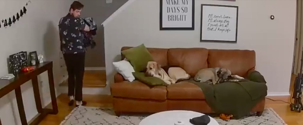 Viral Video of Dog Helping to Carry Laundry Upstairs