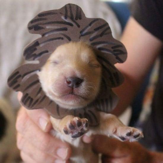 Newborn Puppies in Halloween Costumes