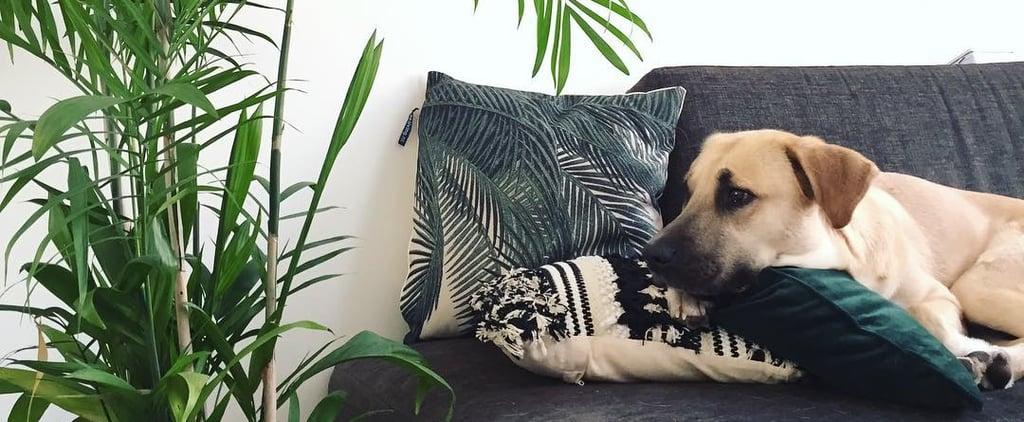 Best Dog-Friendly Houseplants