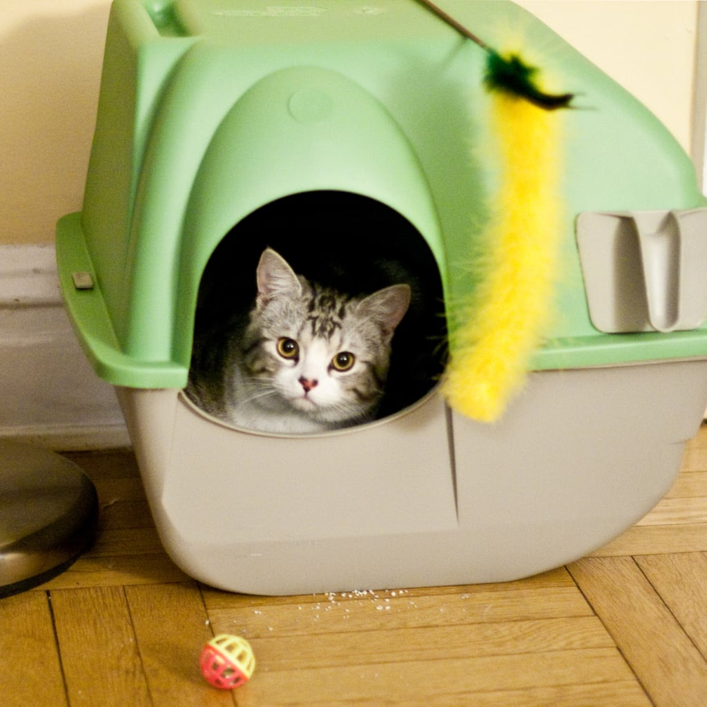 5 litter boxes
