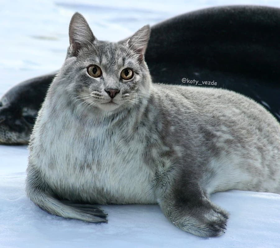 Arctic Sea Lion With a Cat's Face