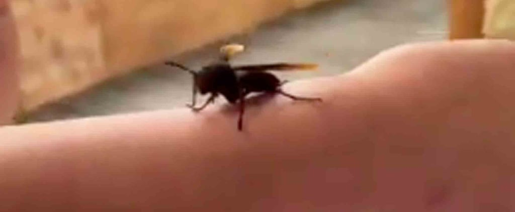 Chrissy Teigen and Daughter Luna Play With a Wasp