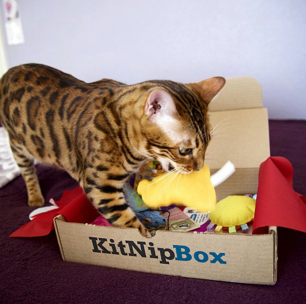 """We can't leave our kitties out of the subscription box fun, and that's where the KitNip Box ($20 and up) comes in. There are two box size options for either a single-cat household or a multicat household. Each box is filled with fun and tasty goodies for your cat, and better yet, the August box is gym themed in honor of the Olympics this month."" — HP"