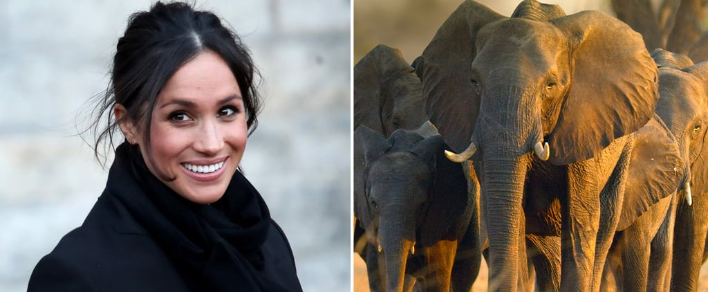 Review of Disney Film Elephant, Narrated by Meghan Markle