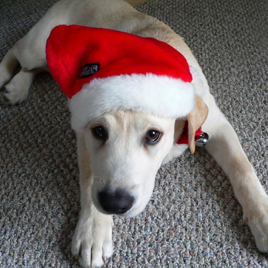 Most Common Pet Danger at Christmas