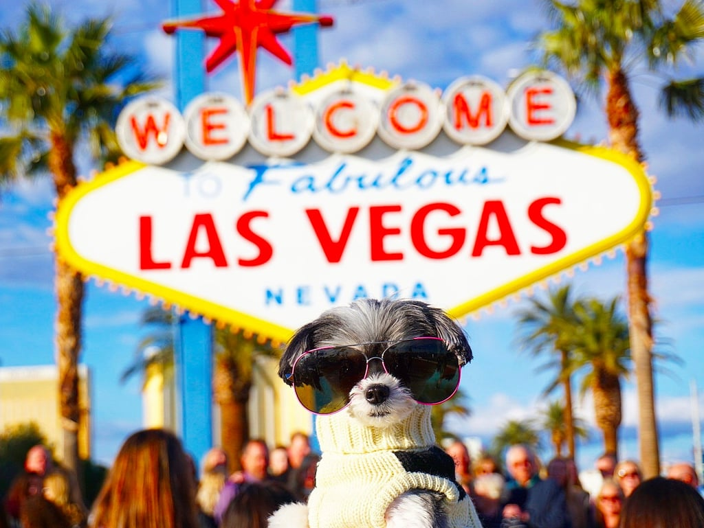 Tinkerbelle the Dog Went to Las Vegas and It Was Seriously EPIC!