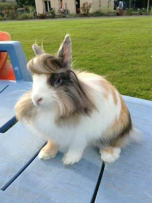 """A hare with flair."" Source: Reddit user antihero17 via Imgur"