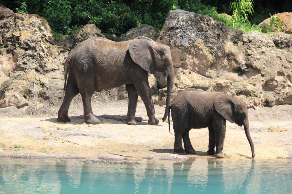 Virtual Tours of Zoos