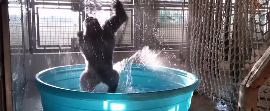 "OK, This Gorilla Dancing to ""Maniac"" Is About to Make You Cry Laughing"