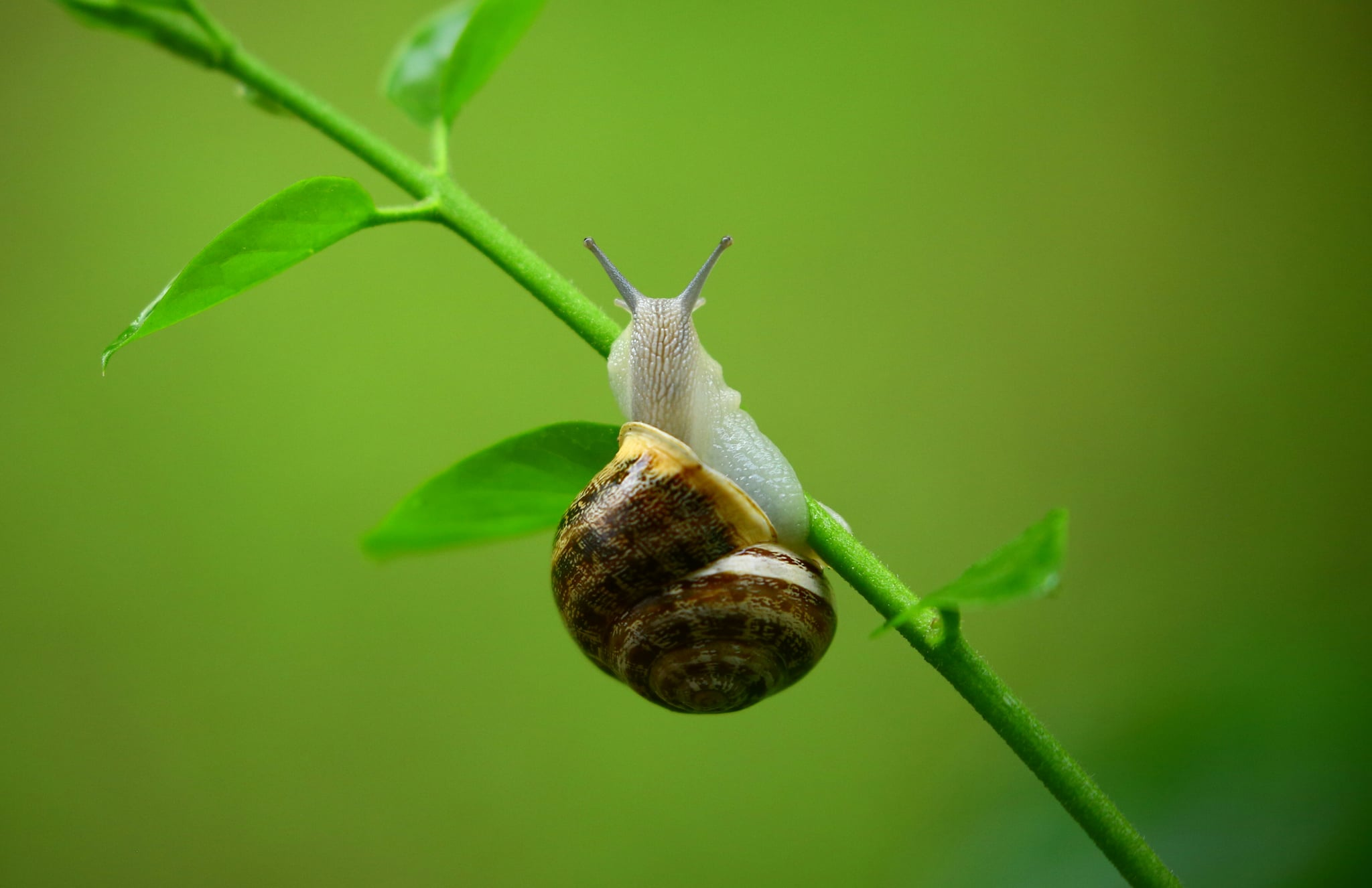 Snail Products Get Rid of Acne | POPSUGAR Beauty