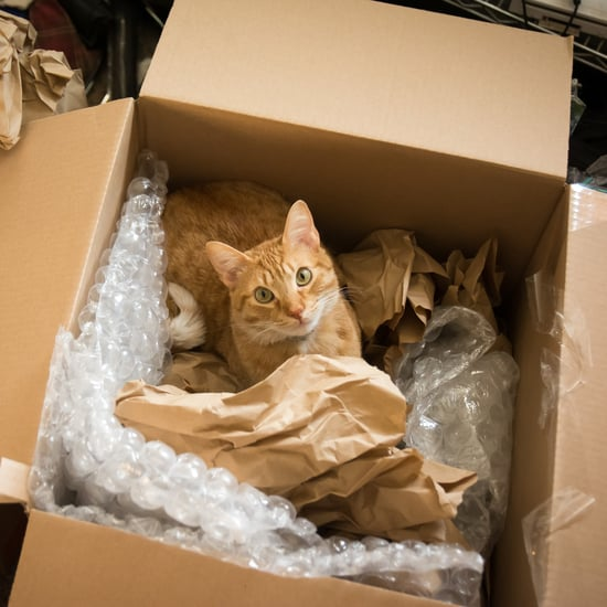 How Does Moving Affect My Cat?
