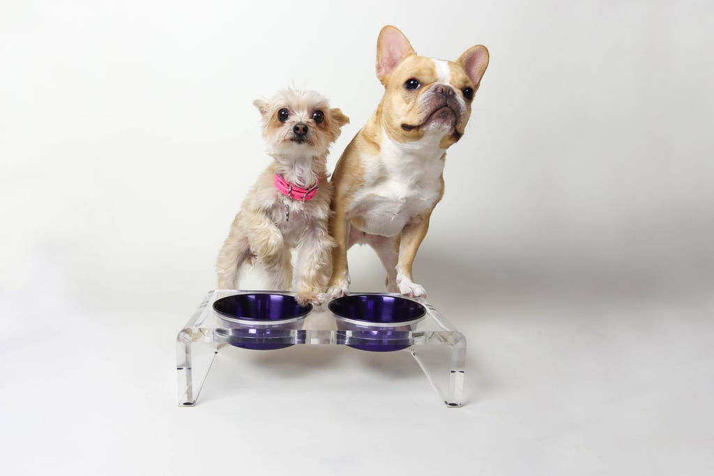 """Acrylic Raised Pet Feeder  Ella Bean: """"I love eating out of Chloe's when I pop by her place."""""""