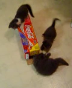 Kitty Play With Coke Box