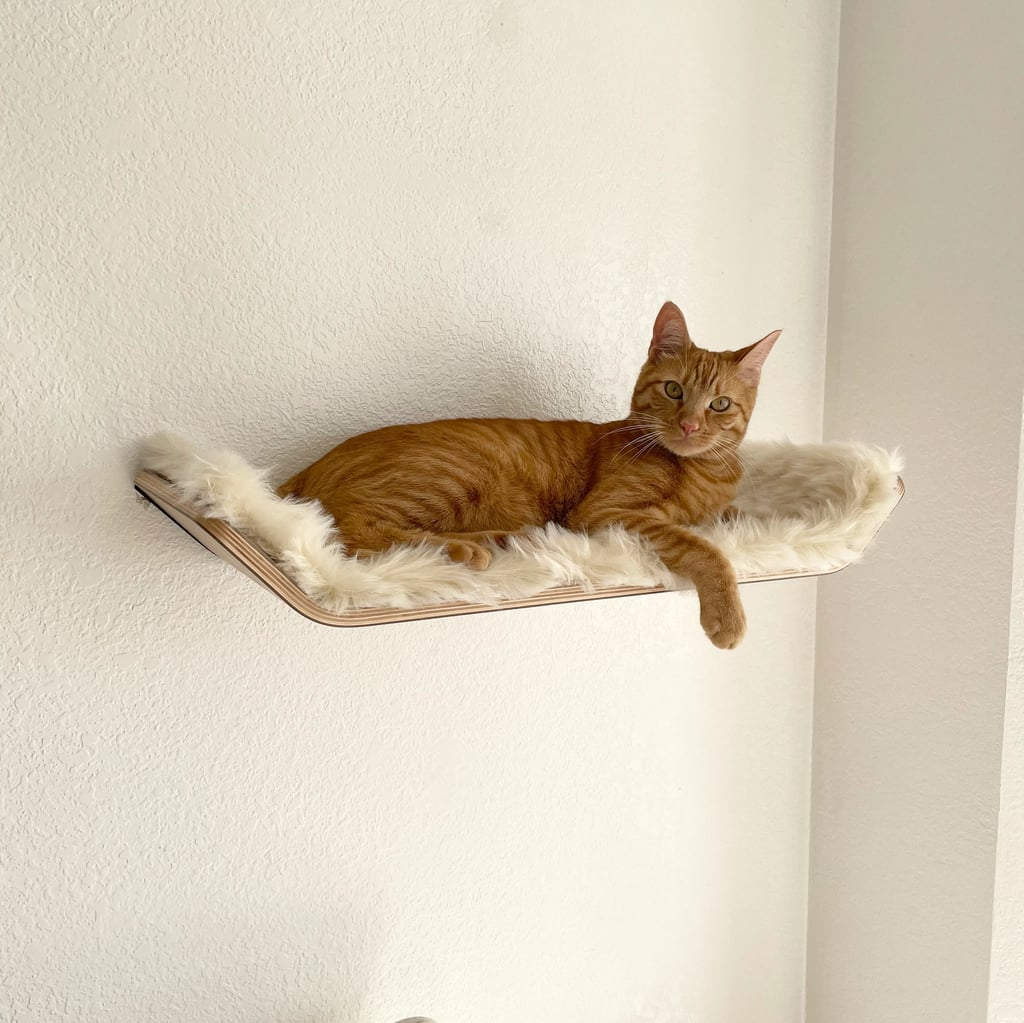 Stylish Cat Bed Shelf | Editor Review
