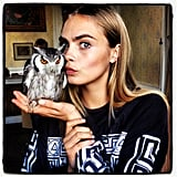 Cara Delevingne struck a playful pose with a stuffed owl. Source: Instagram user caradelevingne